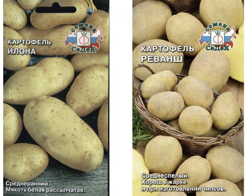 Семена картофеля Илона и Реванш