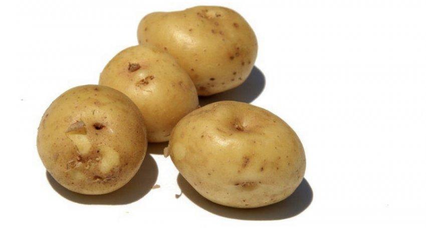 Картофель Лада