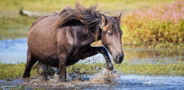 Сколько месяцев беременность у лошади