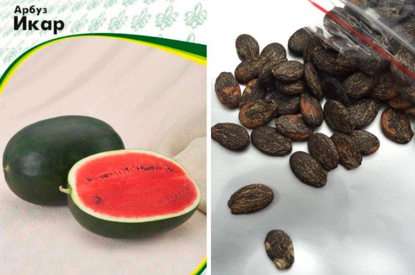 Семена арбуза Икар