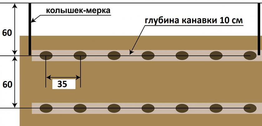 Схема посадки картофеля Хозяюшка