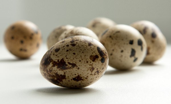 Норма перепелиных яиц в день