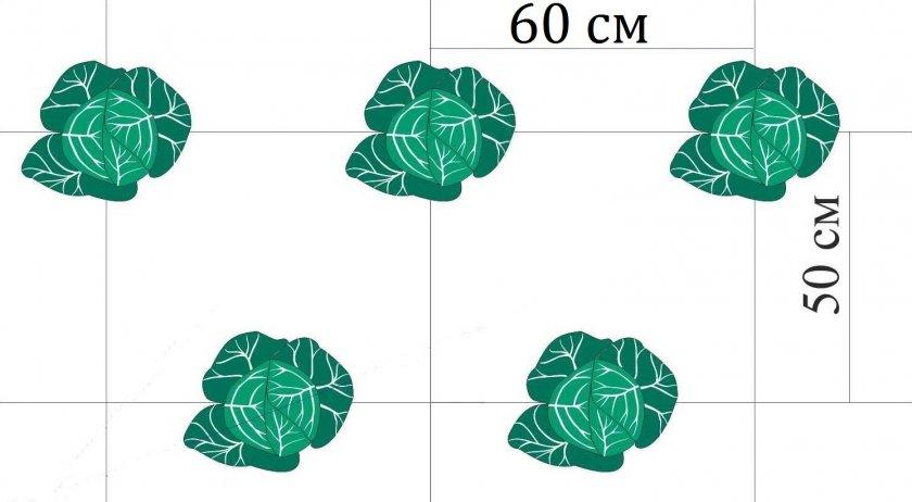 Схема посадки рассады