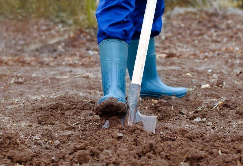 Подготовка грунта для посадки картофеля