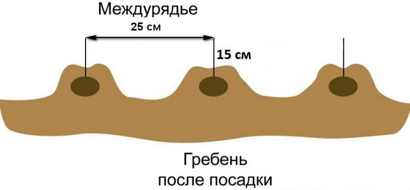 Схема посадки картофеля