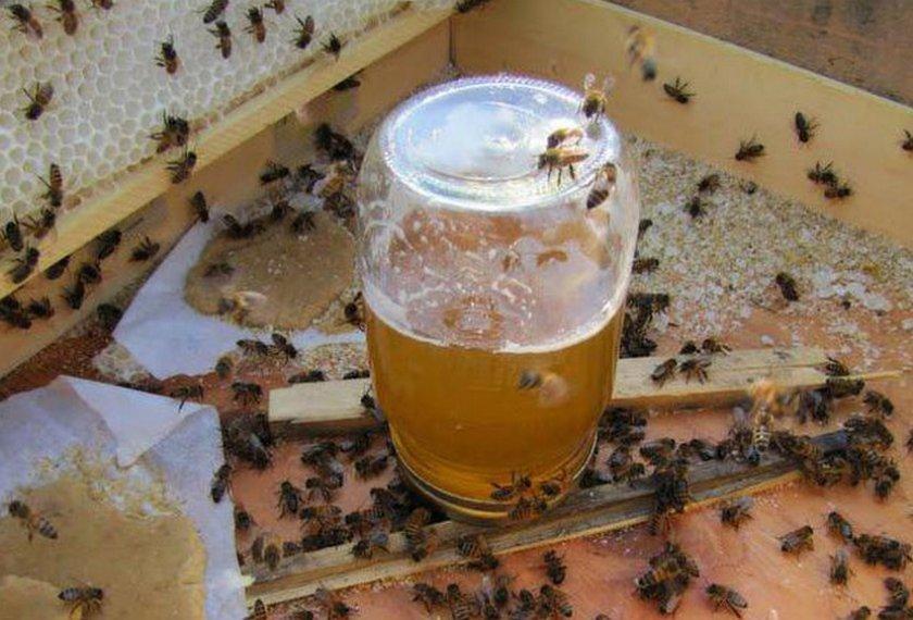 Скармливание пчелам сахарный сироп