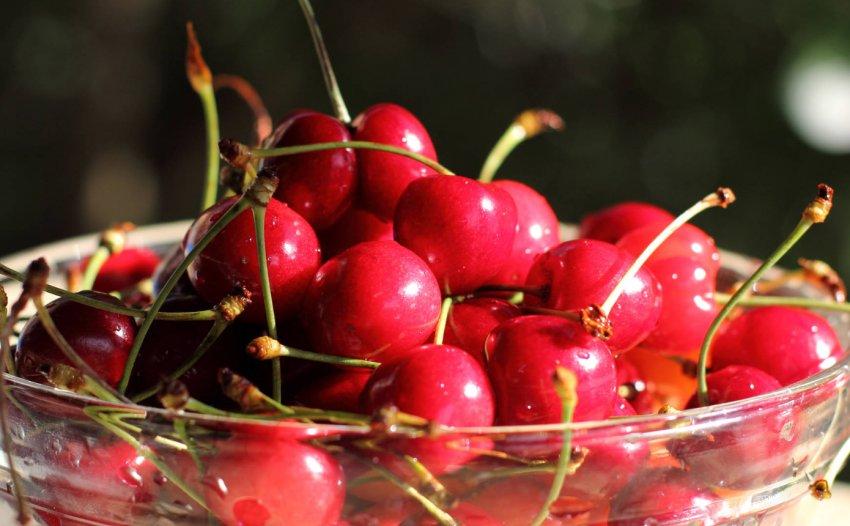 Урожай черешни Василиса