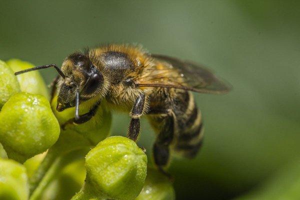 Среднерусская пчела: особенности разведения как бизнес – Cельхозпортал
