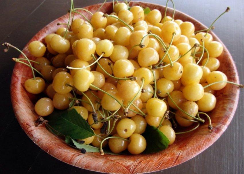 Сбор урожая черешен