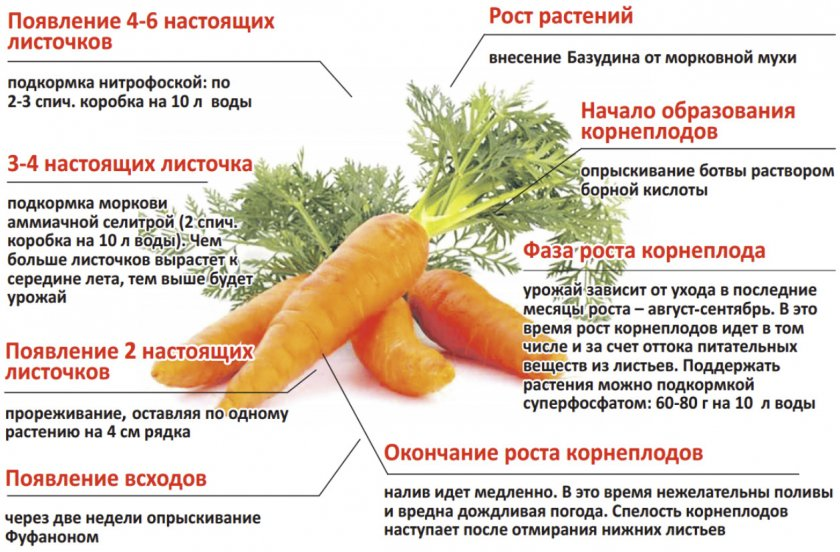 Уход за морковью