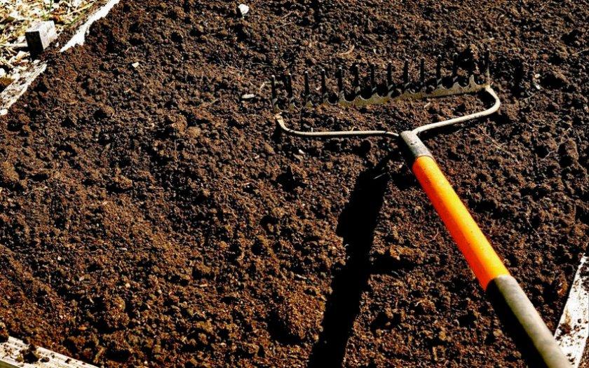 Почва для посадки моркови
