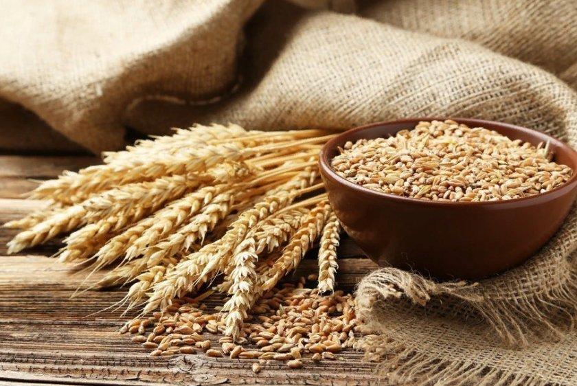 Украинская компания Grain Alliance начала посевные работы