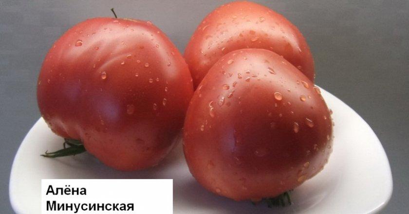 Что значит полудетерминантные помидоры сорта для теплиц и парников