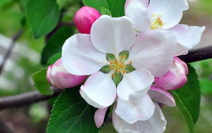 Найдены и обезврежены: в садах Украины уничтожили обнаруженных вредителей