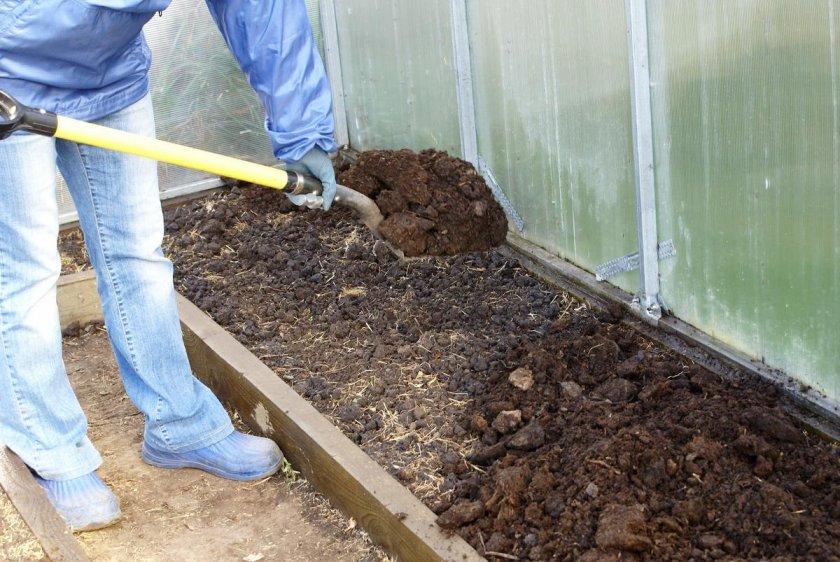 Укладка навоза с соломой на почву перед посадкой кабачков