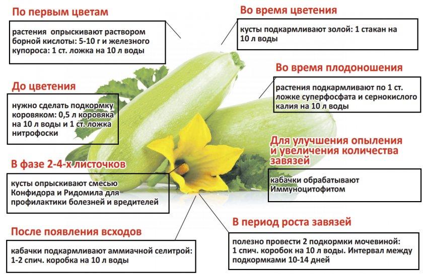 Как подкармливать кабачки