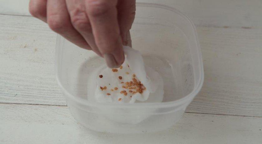 Замачивание и проращивание семян баклажана