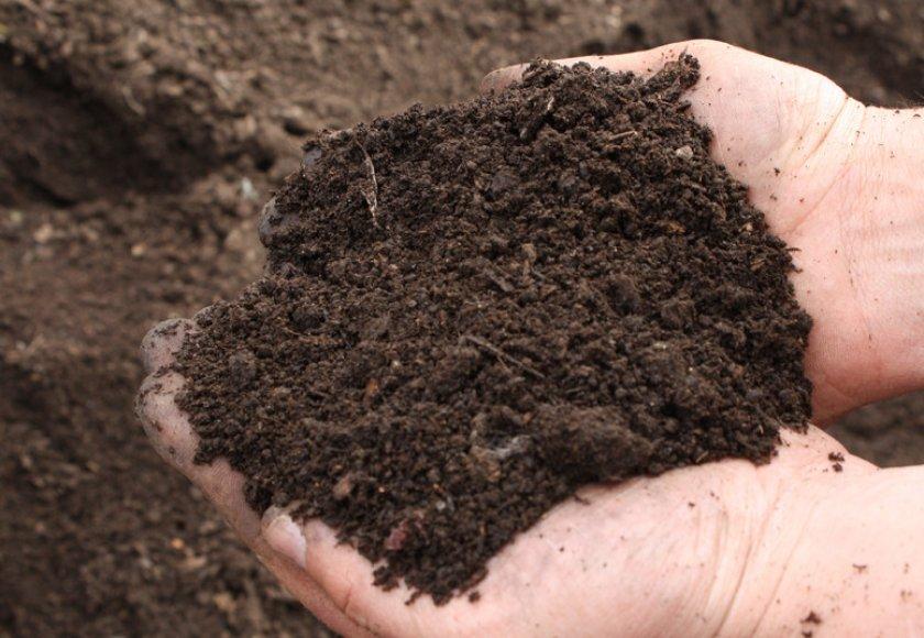 Почва для посадки черешни
