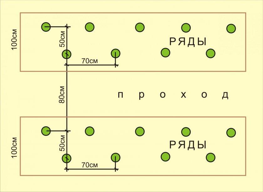 Схема шахматной посадки томатов в теплице