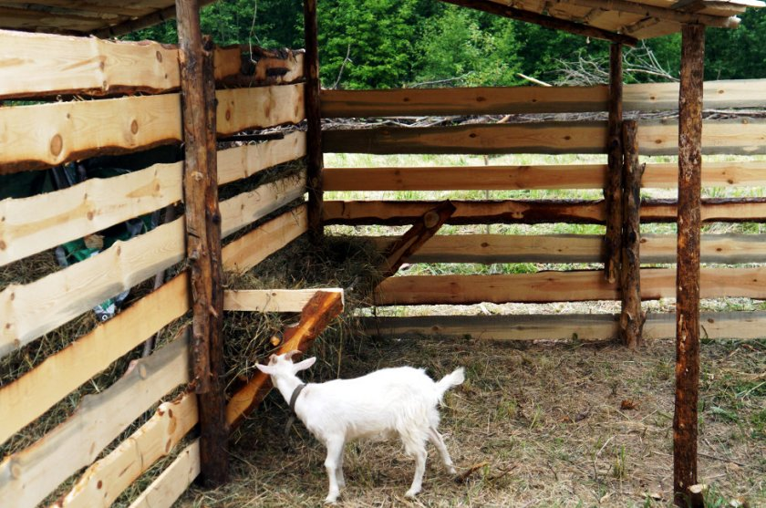 Кормушка для коз
