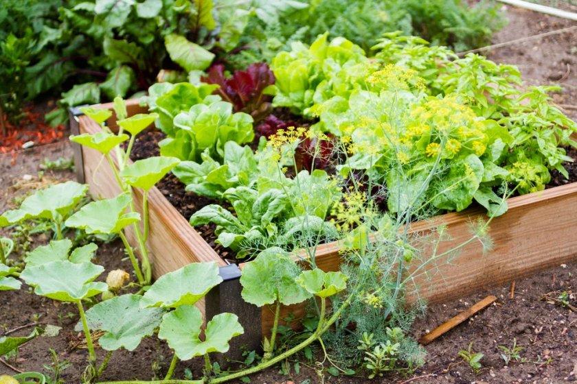 Грядка овощей