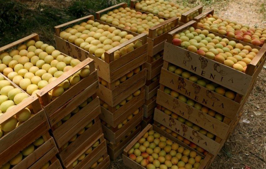 Хранение абрикос