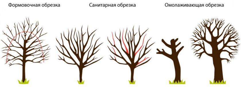 Виды обрезов плодовых деревьев