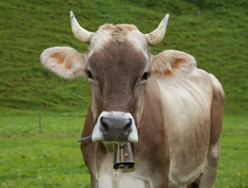 В Комсомольске-на-Амуре обнаружили масштабный коровий некрополь