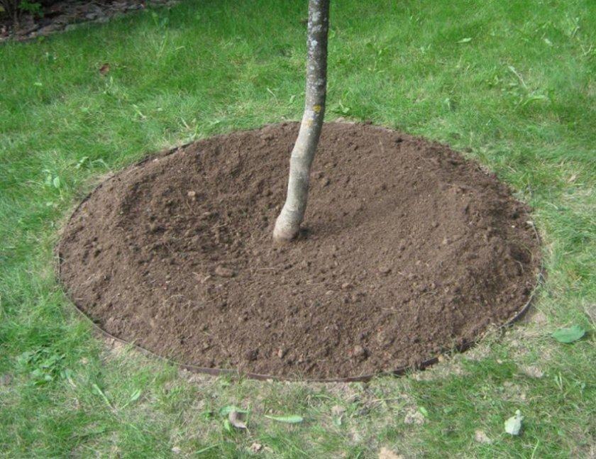 Рыхление почвы приствольного круга