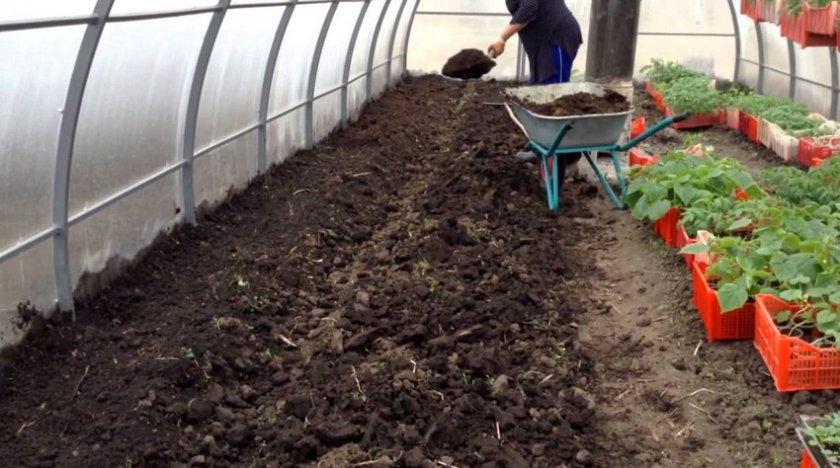 Подготовка грунта в теплице весной