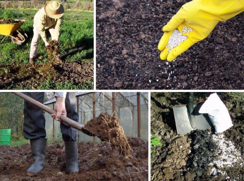 Подготовка почвы под высадку огурцов