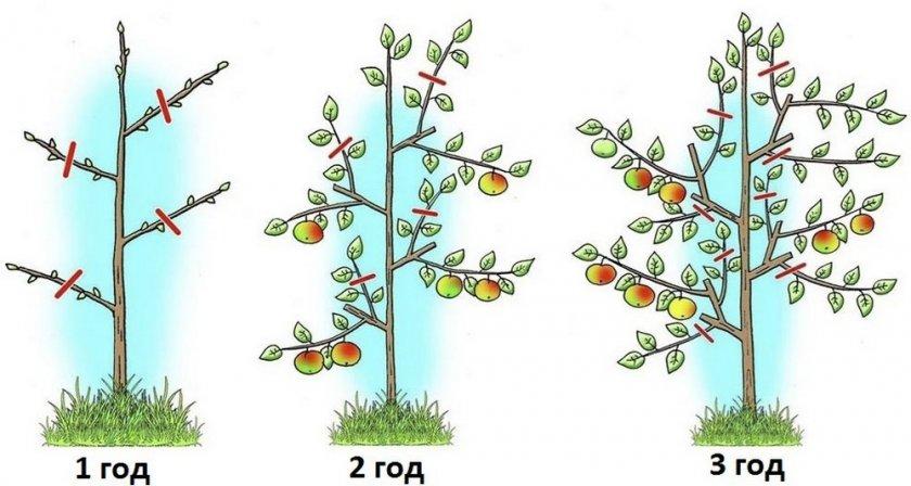 Обрезка карликовых деревьев