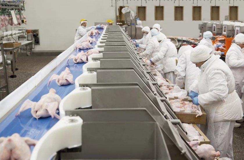 В Северной Ирландии работники крупного завода по производству птичьего мяса проголосуют за потенциальную забастовку