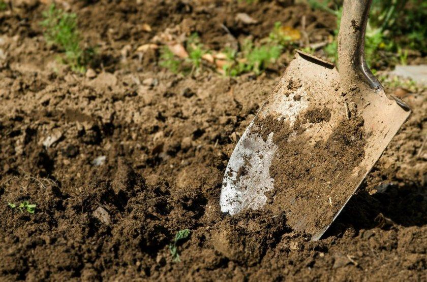 Перекопка грунта после удобрения