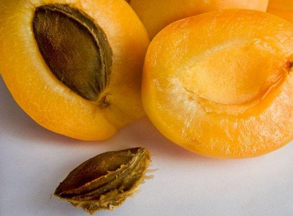 как вырастить из косточки абрикос в домашних