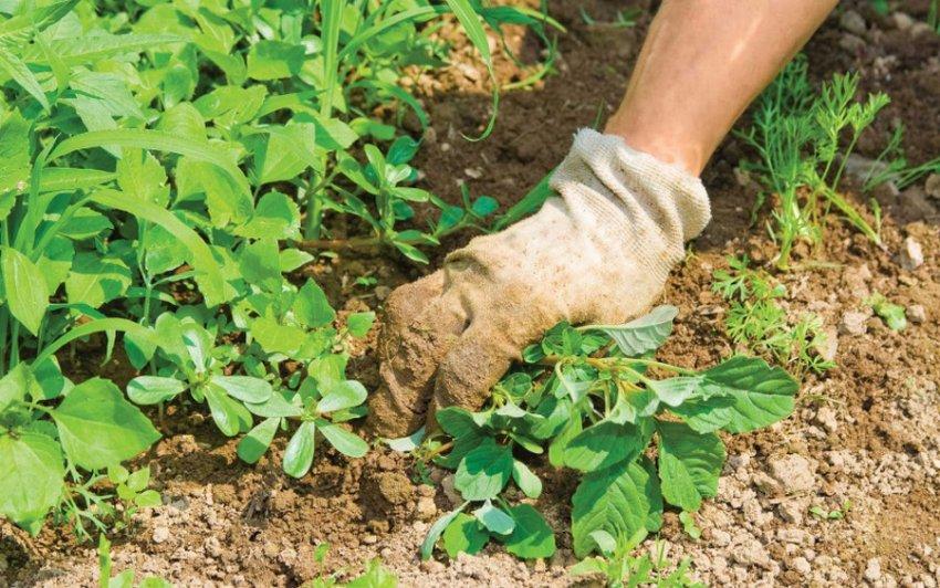 Удаление сорных растений