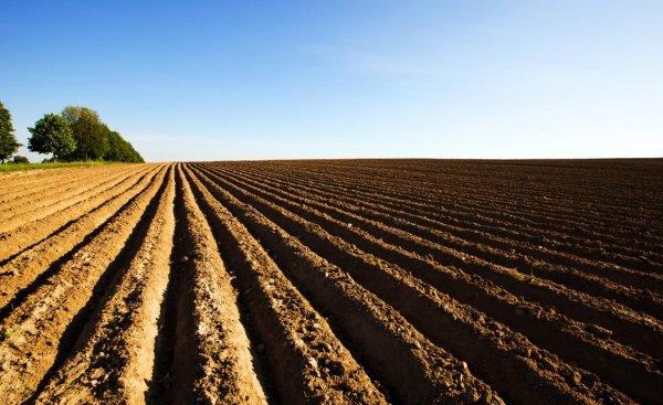 Подготовка почвы осенью под картофель: правила обработки