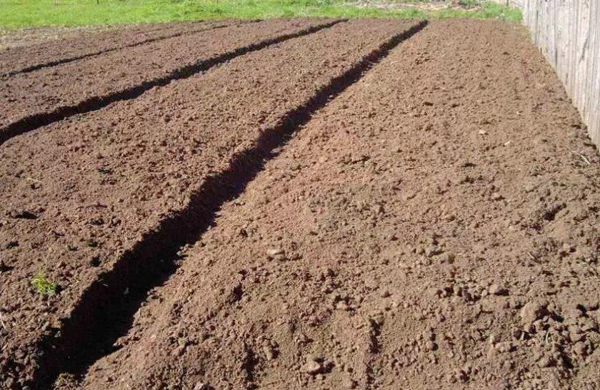 Земля под картофель