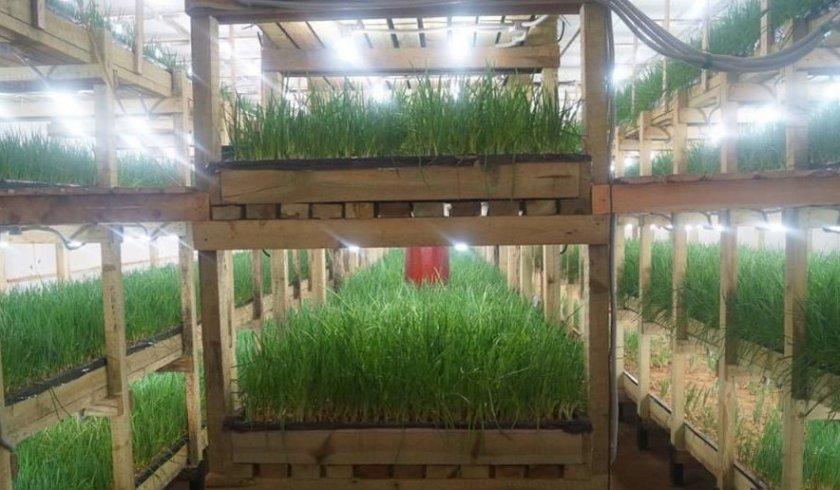 Стеллажи для выращивания лука в подвале
