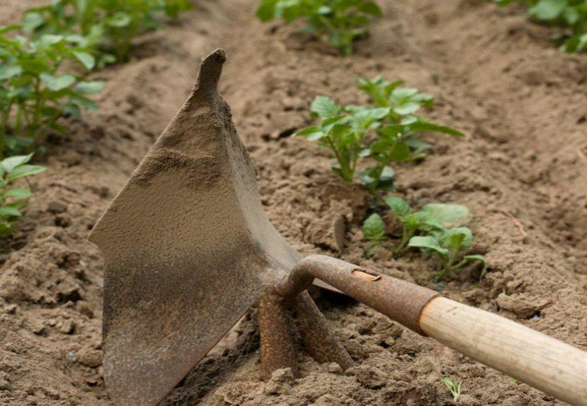 Рыхление почвы картофеля