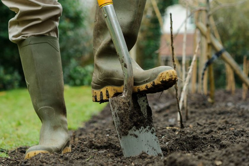 Перекапывание земли перед посадкой клубники