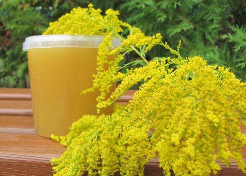 Мёд из золотарника