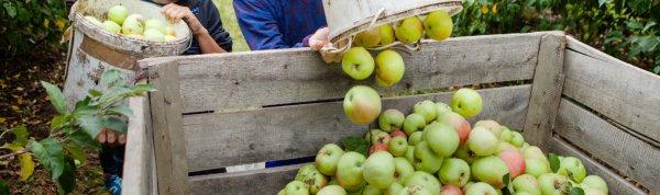 Прибыльное дело — фруктово-плодовый сад