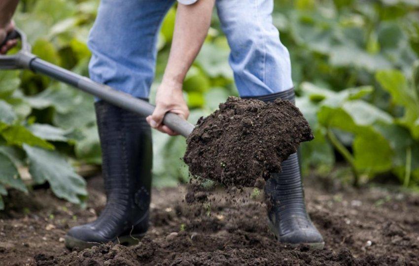 Перекапывание земли с внесением удобрений