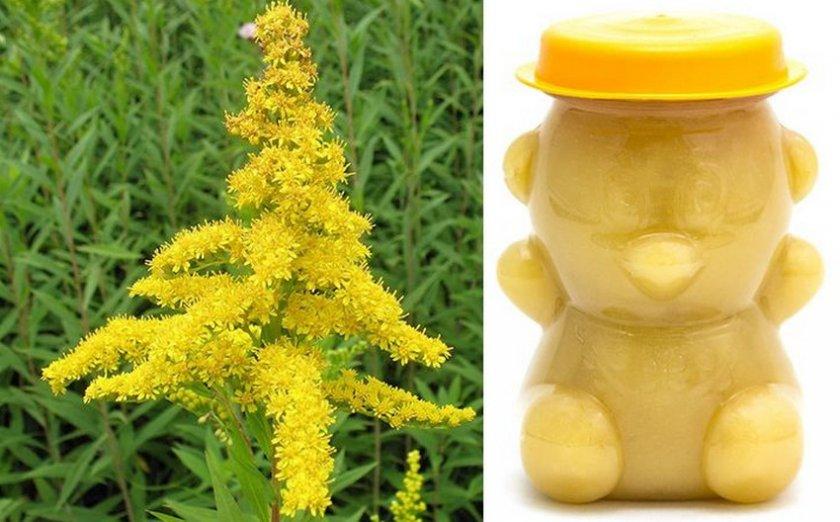 Хранение золотарникового мёда