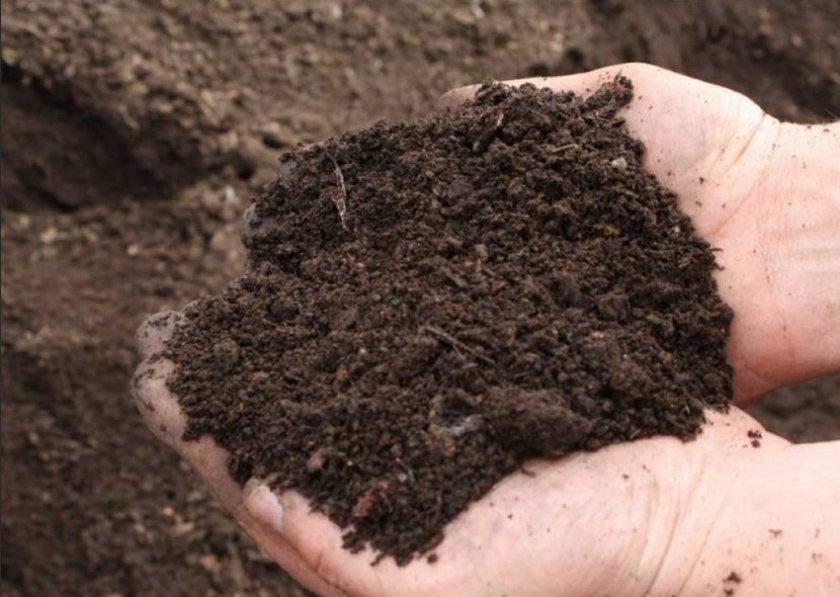 Почва для посадки картофеля
