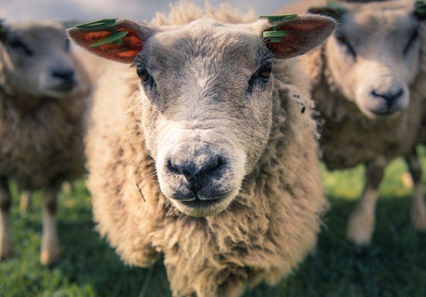Правительство РФ отправит в Крым 300 миллионов на нужды коз и коров