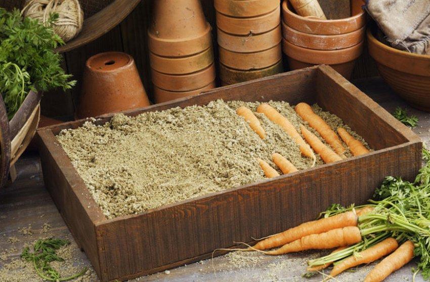 Хранение моркови в ящиках из дерева
