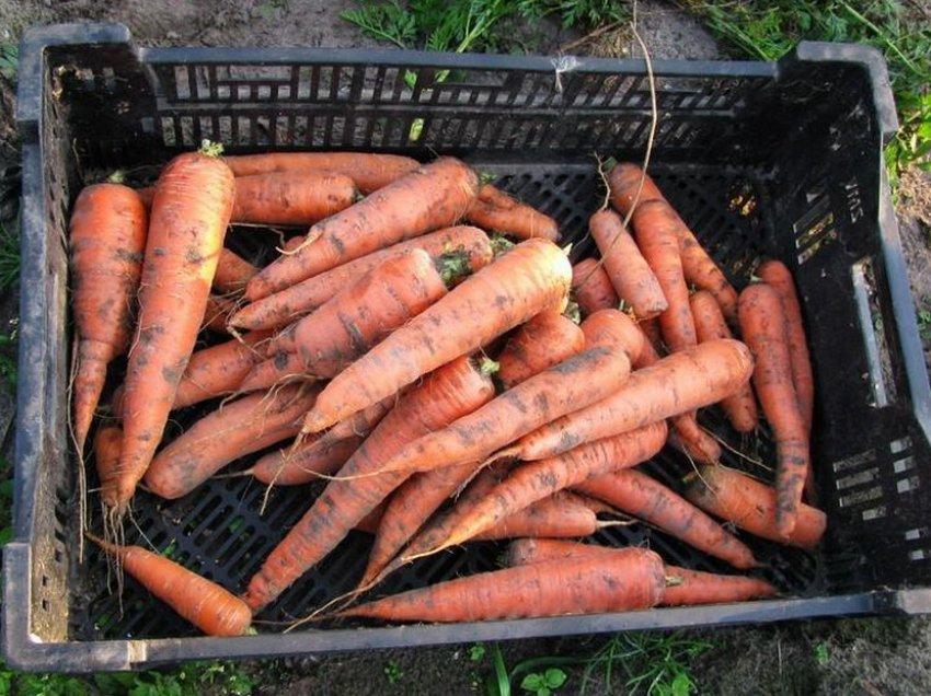 Хранение моркови в ящиках из пластика