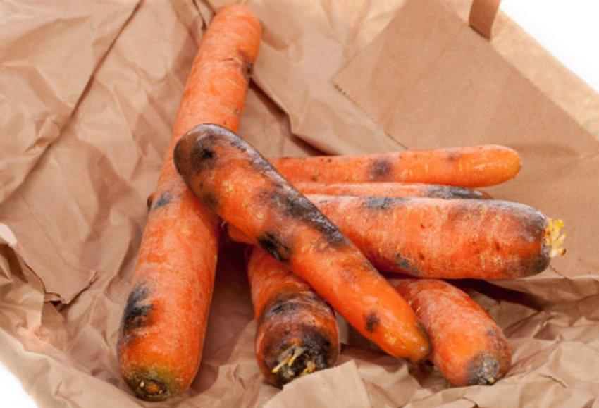 Серая гниль на моркови